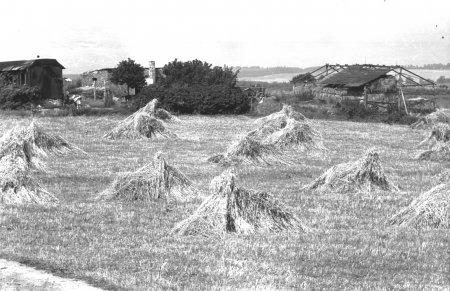 Nördlich der Ziegelei, um 1955 (links ist ein Eisenbahnwaggon zu erkennen)