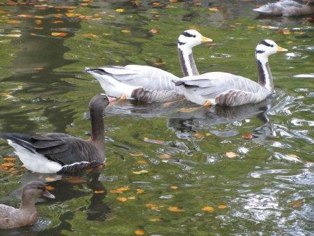 Teich mit Enten