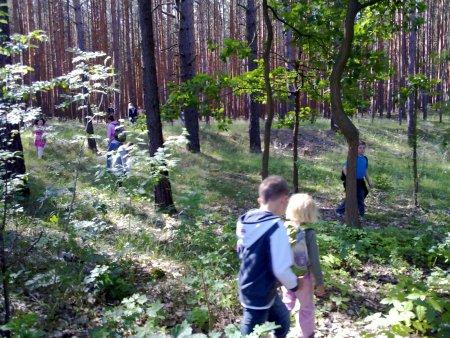Unser Wald 1