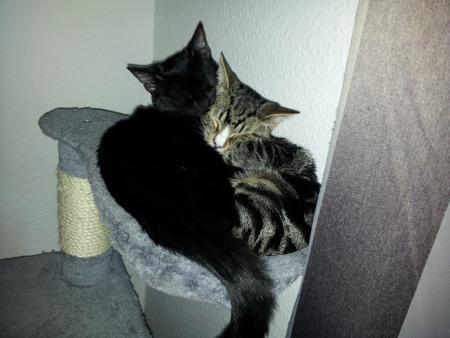 Abby & Pascha