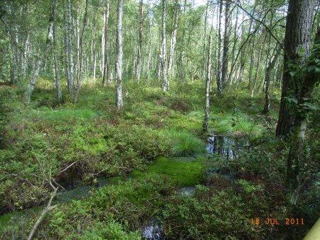 Waldmoor_Mewes