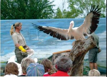 Vogelpark Marlow - Show mit Tieren