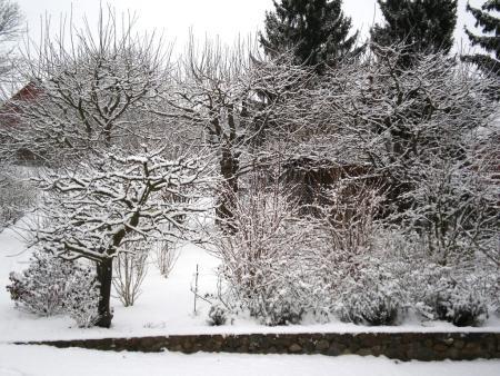 Garten 9