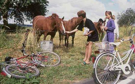 Radweg und Pferde