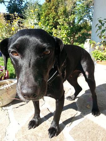 Vereinswachhund Sunny
