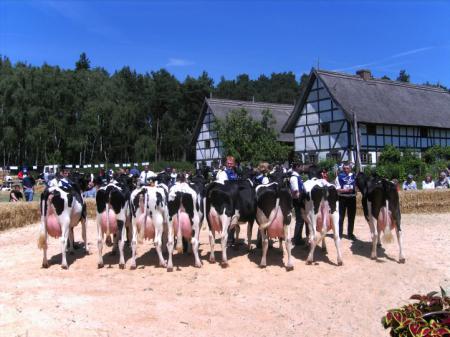 Rinderleistungschau