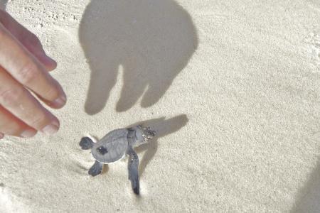 Schildkröte 3