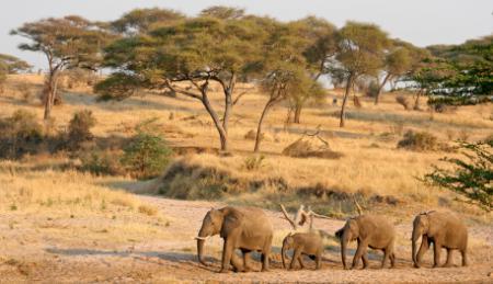 Elefanten.jpg