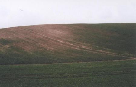 Abb. 2_Schlechte Bodenqualität auf den Kuppen.JPG