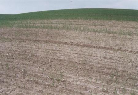 Abb. 3 Schlechter Pflanzenbestand wegen der Bodenheteroginität