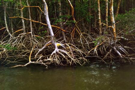 Ort: Água Doce/ Bundesland: Maranhão