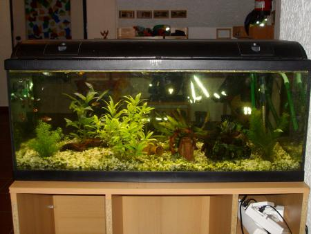 Aquarium Niederstraße