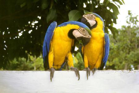 Ort: Presidente Fiqueiredo  Bundesland: Amazonas