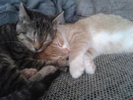 Titus & Talia