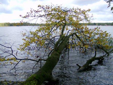 Baum-im-See-S.Assatzk