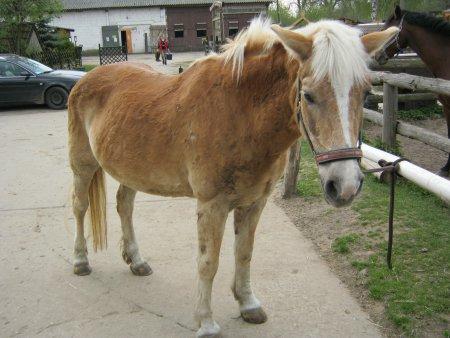 Unser Reitpferd Steffi