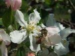 Unsere Bienen - Bild 1