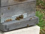 Unsere Bienen - Bild 2