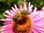 Unsere Bienen - Bild 3