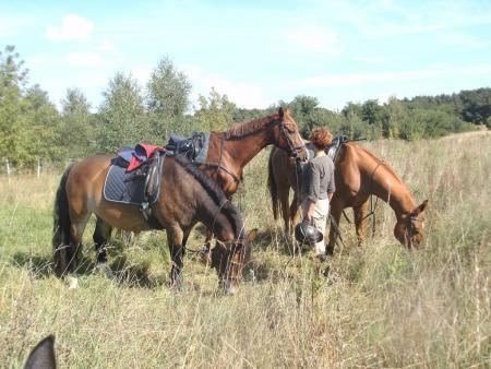 13 Sigrid 3 Pferde 1 Mensch