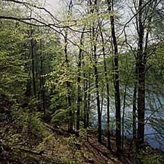 buchenwald-tetzlaff.jpg