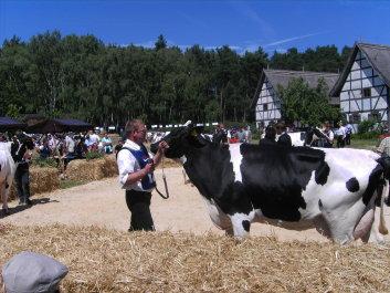 Rinderleistungschau3