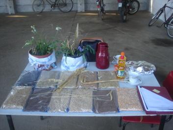 Prüfungsthema: Saatgut erkennen