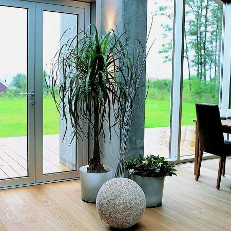 blumen hausner albertine hausner die pflanze. Black Bedroom Furniture Sets. Home Design Ideas
