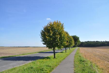 Radweg von Münchehofe nach Obersdorf