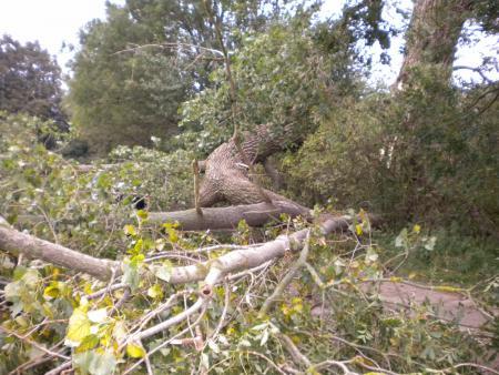 Baumsperre 27.09.2010
