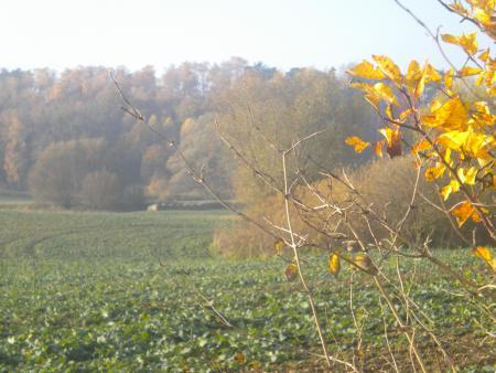Groß Frdenwalde Novemberstimmung