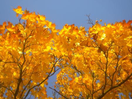 Herbststimmung Groß Fredenwalde