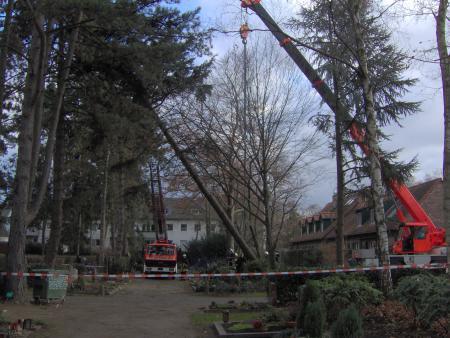 Die Löschgruppe Strunden, Drehleiter 9, Rüstwagen 2 und Kran 2 sind nötig um diesen Baum zu sichern