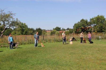Hunde 2012 T4