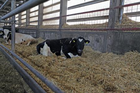 Milchproduktion 2