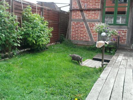Lucy im Garten