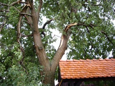 Baumbeseitigung in Hess. Oldendorf