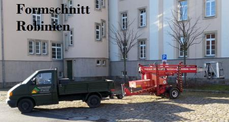 Baumschnitt Robinien Bautzen