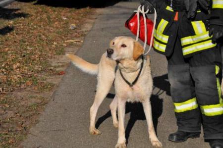 Der gerettete Hund (Quelle: Miklos Laubert www.bf-koeln-einsaetze.de)