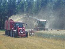 Getreideganzpflanze häckseln