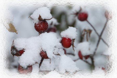 Gipsboy im Schnee