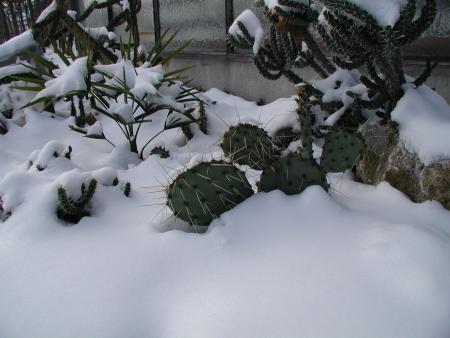 Im Schnee 07 01 09 003.jpg