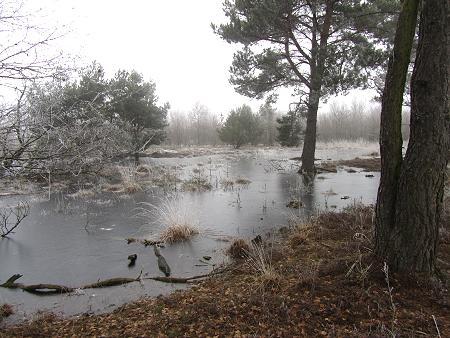 Winter im Moor 4