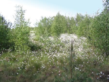 Blühendes Moor 1