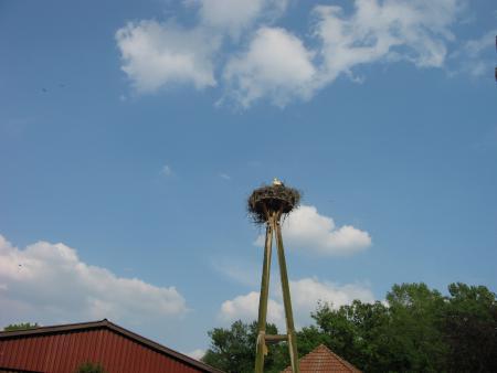 Storchennest im Tierpark