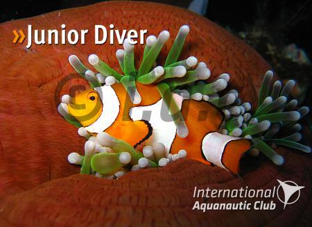 junior_diver2013.jpg