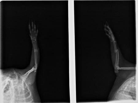 Knochenchirugie Kaninchen