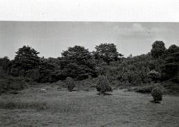 Schafwaschepfuhl 1923