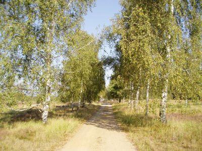 Naturpark Niederlausitzer Heidelandschaft  2