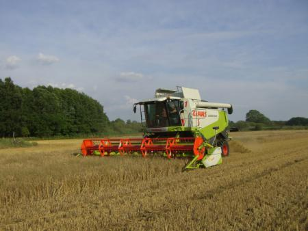 Andreas Germer mit MD Claas Lexion 540 in Fischwasser, Kleine Heide links